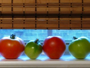 vintagecraftsandmore.com - Tomatoes on the windowsill
