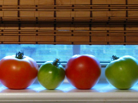 Tomatoes on the windowsill