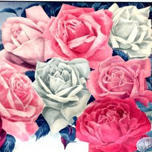 Vintage Pink White Red Roses Clip Art