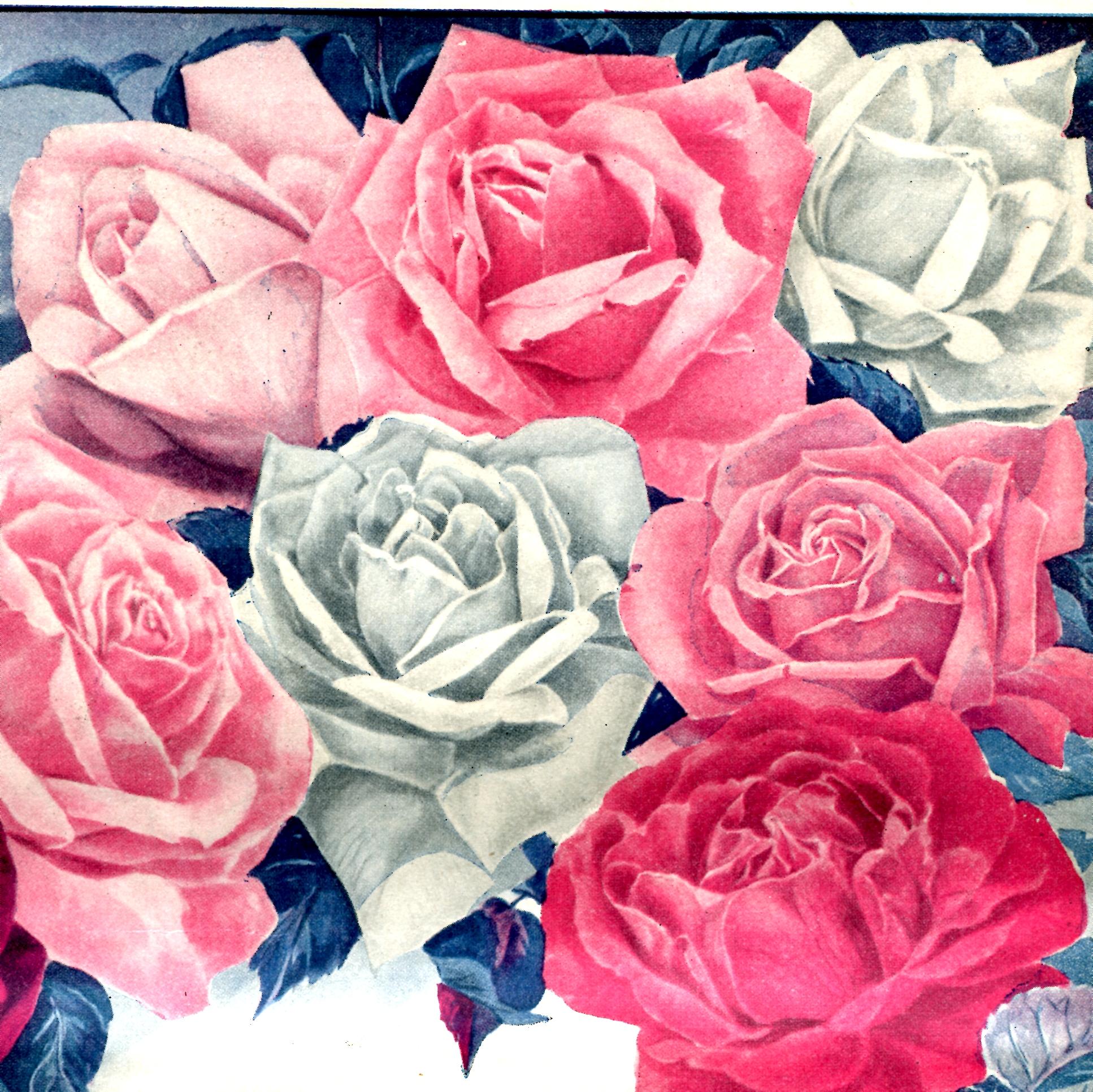 Vintage Valentine S Day Poem And Roses Vintage Crafts And More