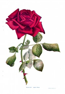 Vintage Crafts and More - Red Rose Silk Embroidery Pattern