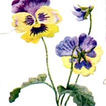 Belding Silks Pansy Embroidery Pattern Color Plate - Vintage Crafts and More