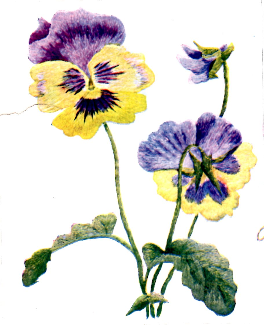 Belding Silks Embroidery Patterns Wild Rose Violet Pansy And Sweet