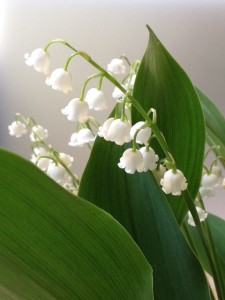 lily of the valley embroidery pattern vintage crafts and more