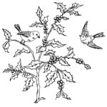 Briggs Embroidery Transfer Pattern Birds and Holly