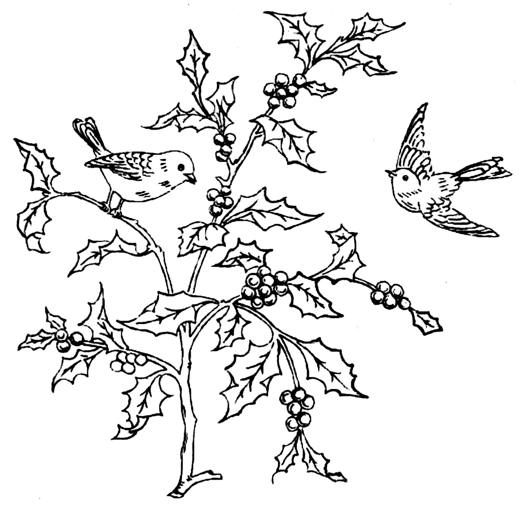 free evening owl embroidery design or coloring page vintage