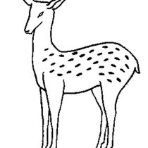 Deer embroidery pattern