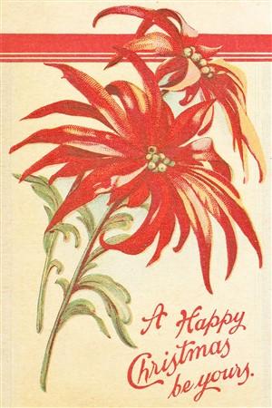 Vintage Christmas Postcard Poinsettia