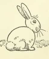 Draw a Bunny Rabbit Single